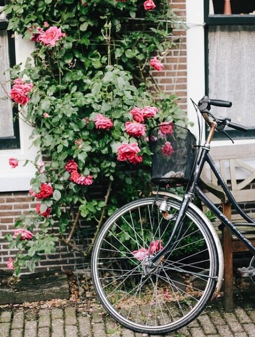 Fiets bij rozenstruik